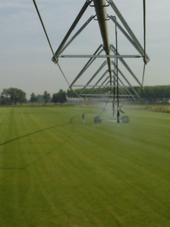 irrigazione-prato-rotoli