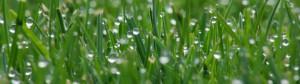 pioggia su prato 1